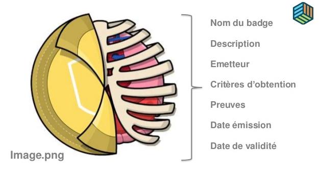 anatomie-badge-numerique